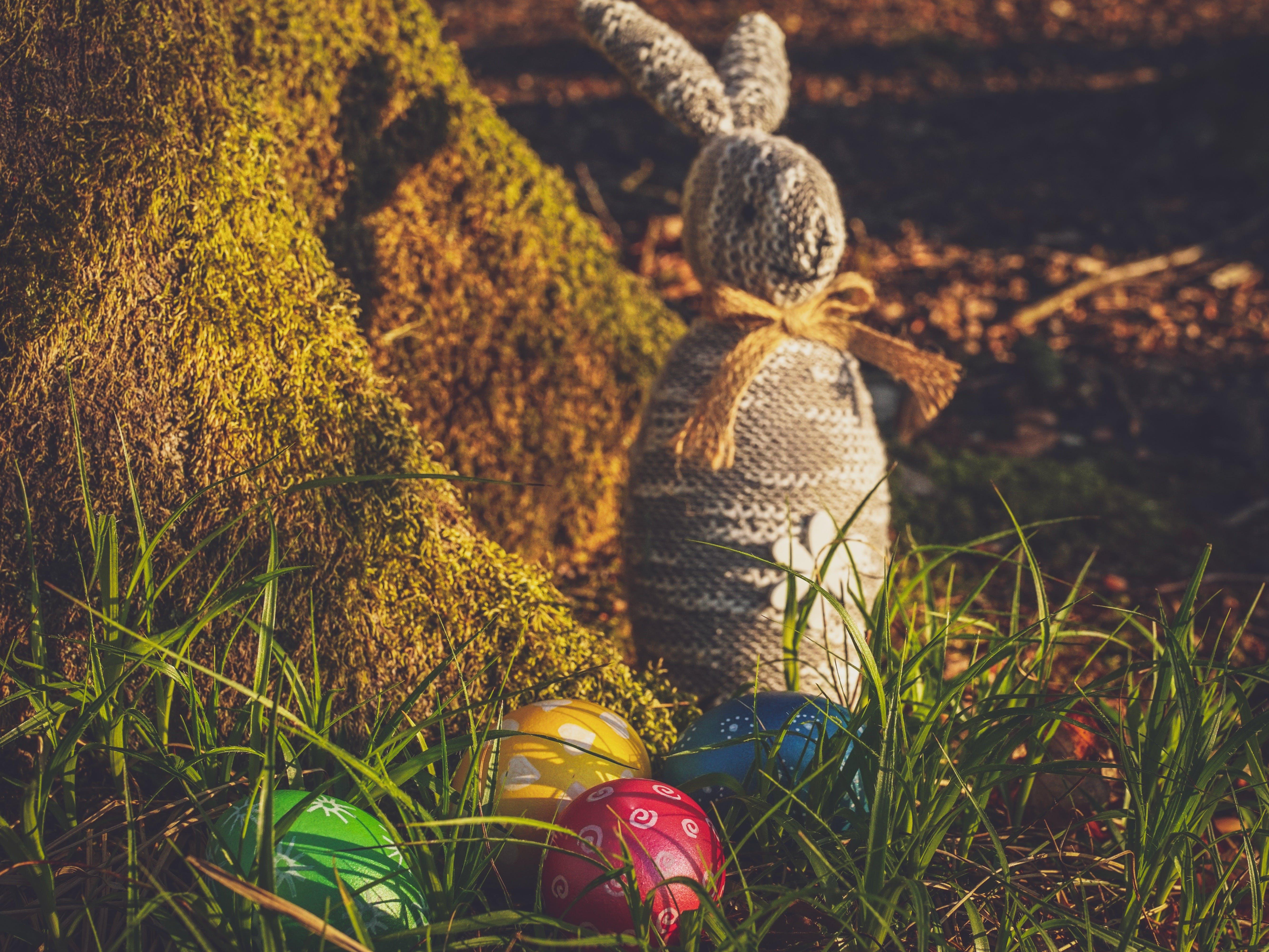 คลังภาพถ่ายฟรี ของ กระต่ายอีสเตอร์, กลางแจ้ง, หญ้า