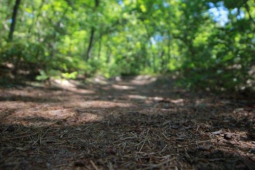 Fotobanka sbezplatnými fotkami na tému les