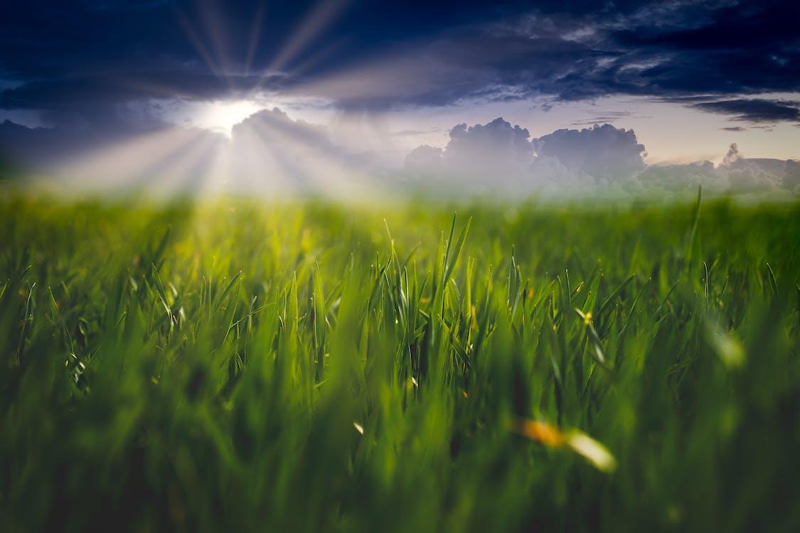 αγρόκτημα, αγροτικός, ακτίνα ηλίου