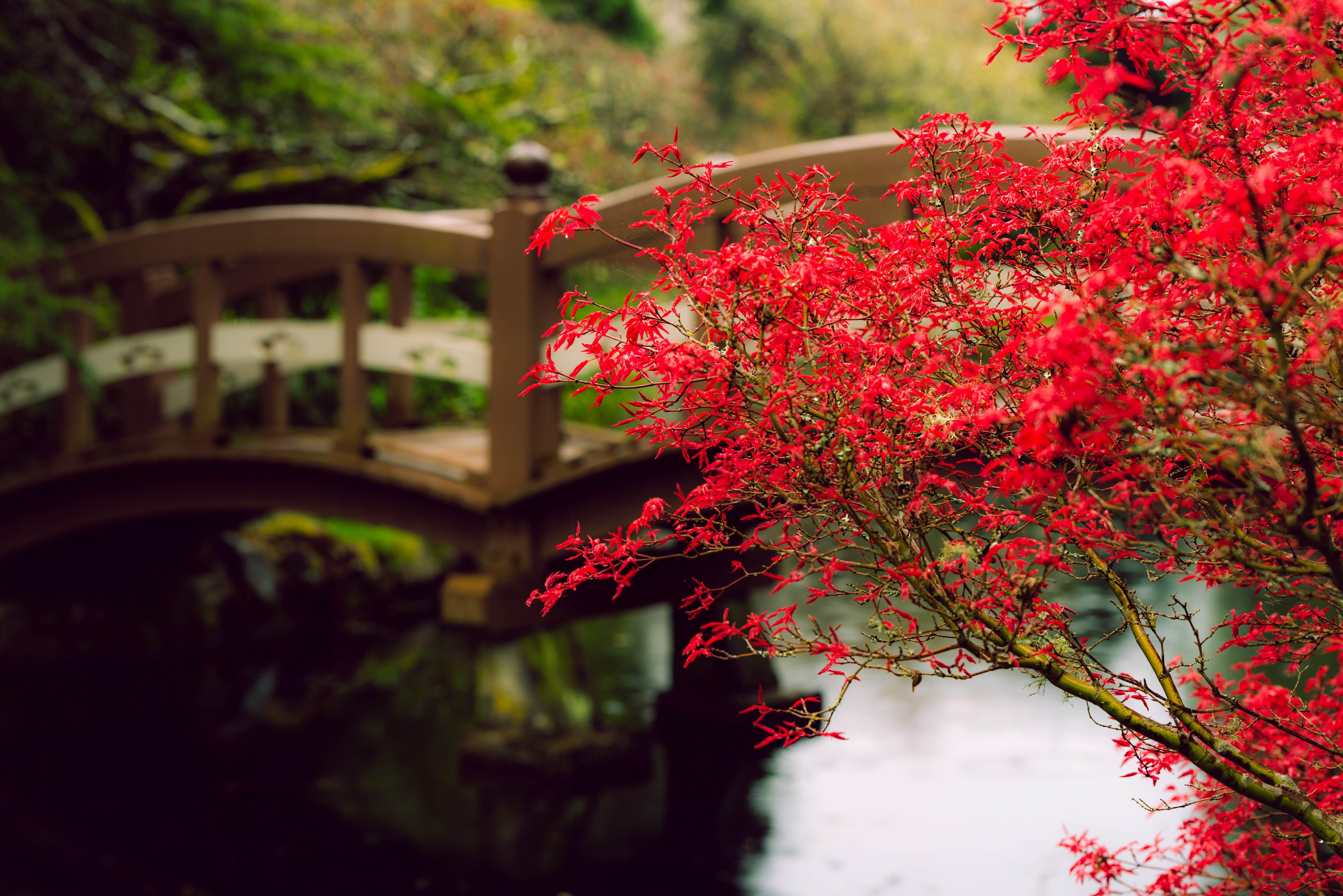 คลังภาพถ่ายฟรี ของ กลางแจ้ง, ความสงบเงียบ, ต้นเมเปิล, ธรรมชาติ