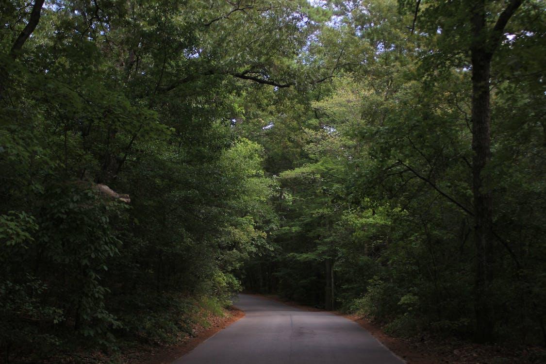 chodník, divá príroda, divočina