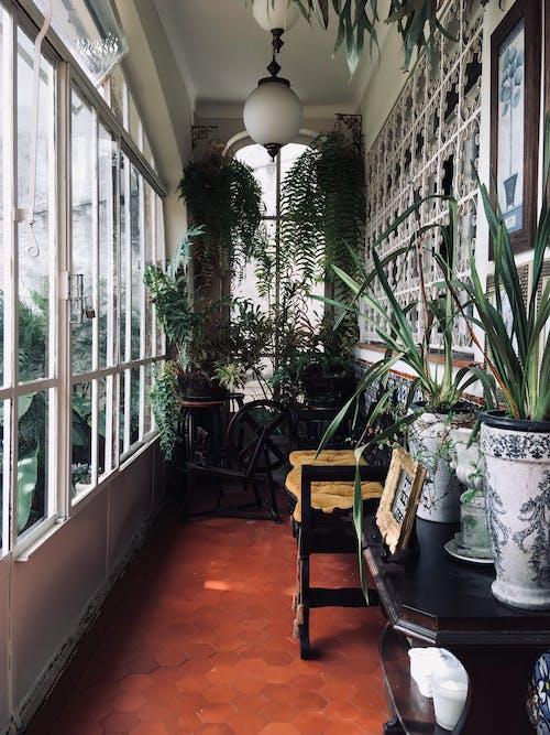 Ảnh lưu trữ miễn phí về ánh sáng, ánh sáng ban ngày, bình hoa, các cửa sổ