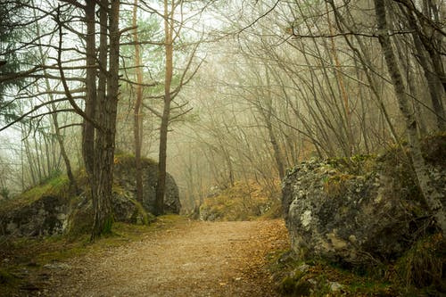 Gratis arkivbilde med gress, naturskjønn, skog, tåke
