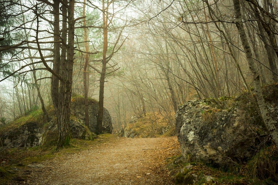 arbori, ceață, cețos