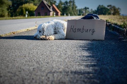 Fotobanka sbezplatnými fotkami na tému asfalt, cesta, domáce zviera, Hamburg