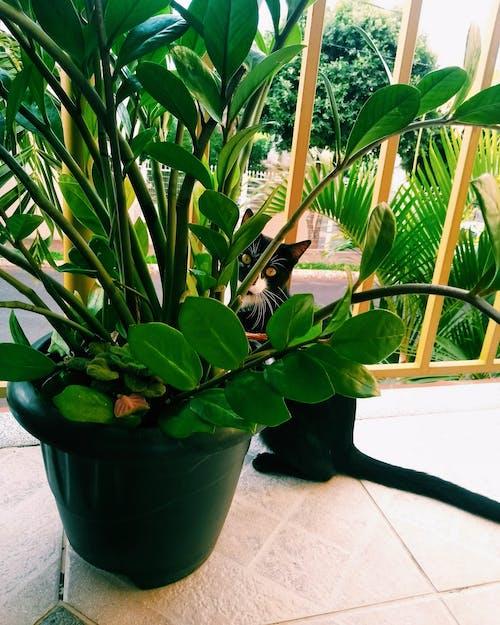 Imagine de stoc gratuită din ceaun, creștere, frunze, plantă de apartament