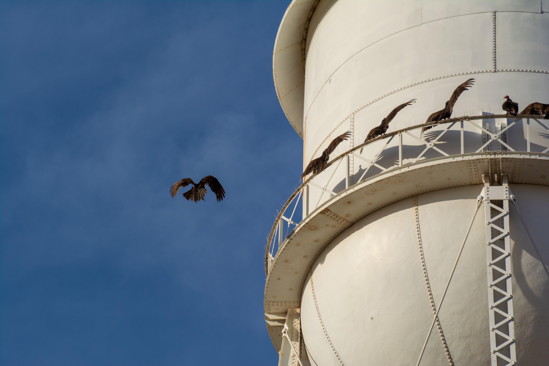 Free stock photo of bird of prey, birding, birds, blue sky