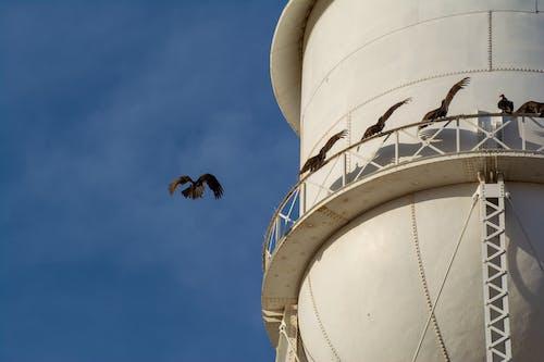 Δωρεάν στοκ φωτογραφιών με αρπακτικό πουλί, γαϊδουράγκαθο, γαλάζιος ουρανός, κλαδί