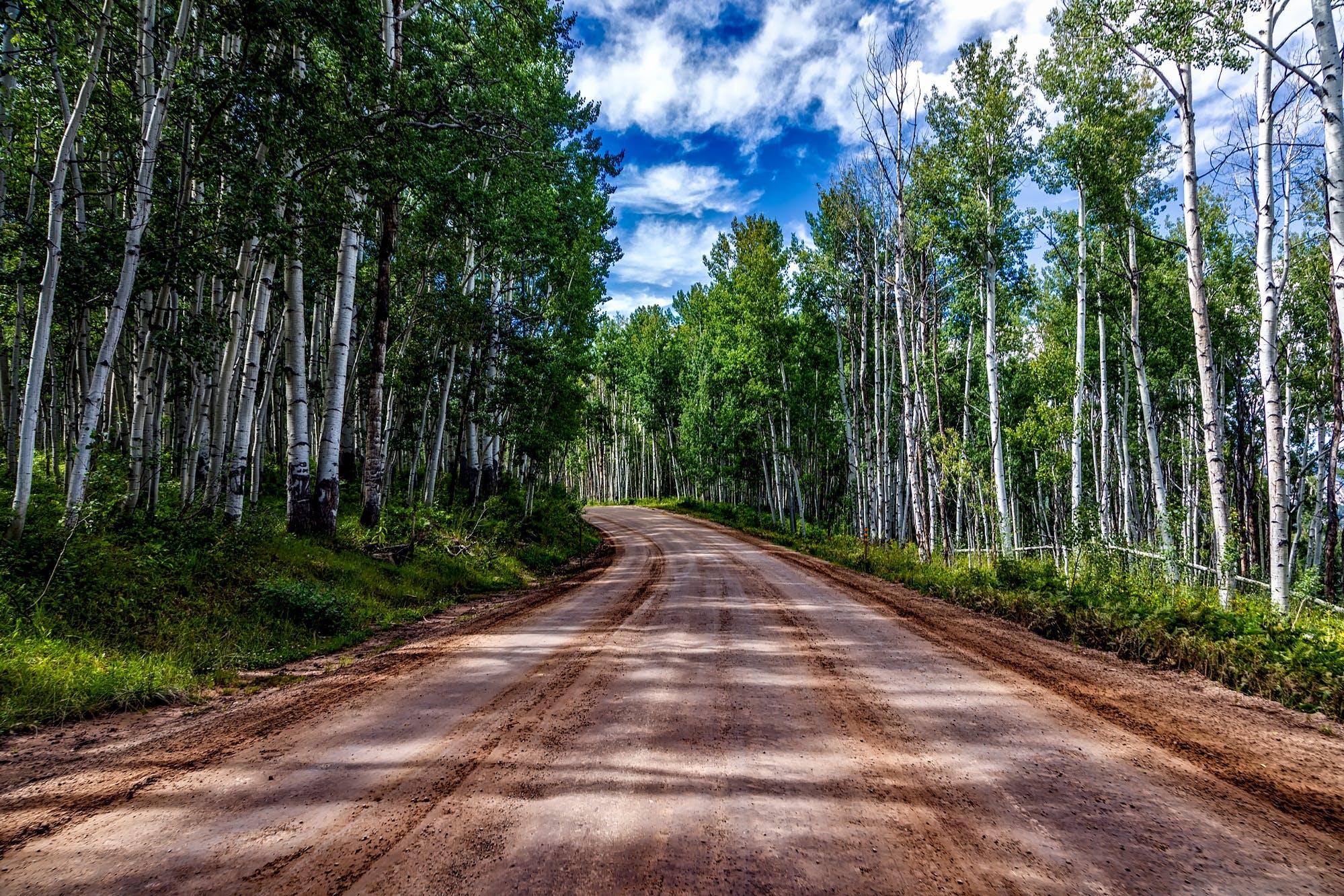 Kostnadsfri bild av aspar, grusväg, Land, landskap