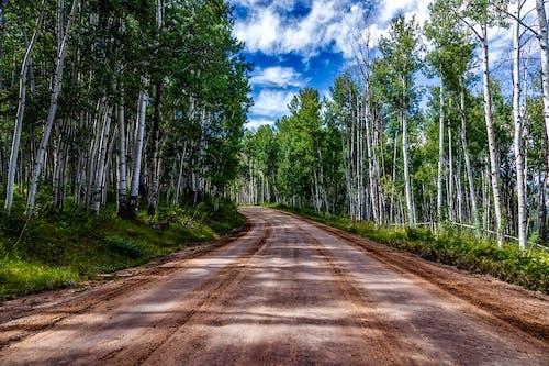 Základová fotografie zdarma na téma aspens, chodník, divoký, kmen