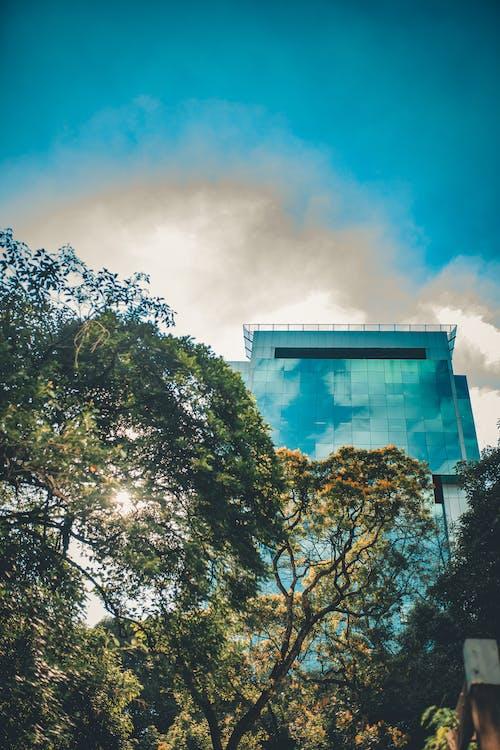 Imagine de stoc gratuită din arbori, arhitectură, clădire