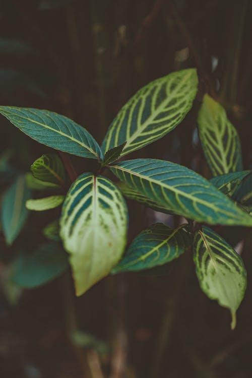 Δωρεάν στοκ φωτογραφιών με ανάπτυξη, εργοστάσιο, κήπος, φύλλα