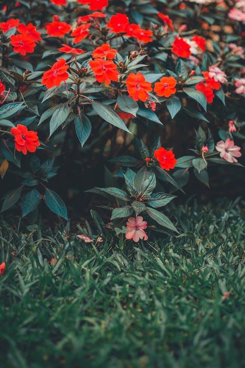 Безкоштовне стокове фото на тему «завод, зростання, квіти, пелюстки»