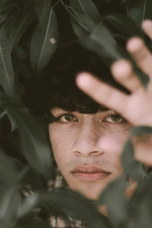 adam, kafadan vurmak, koyu yeşil bitkiler, portre içeren Ücretsiz stok fotoğraf