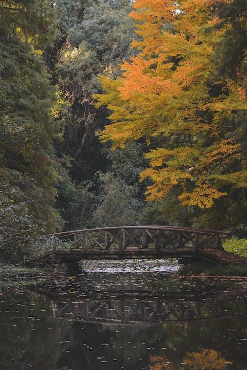 bridge, park, trees