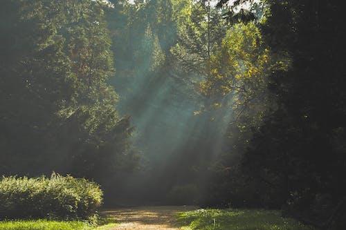 Ingyenes stockfotó erdő, fák, ösvény, park témában
