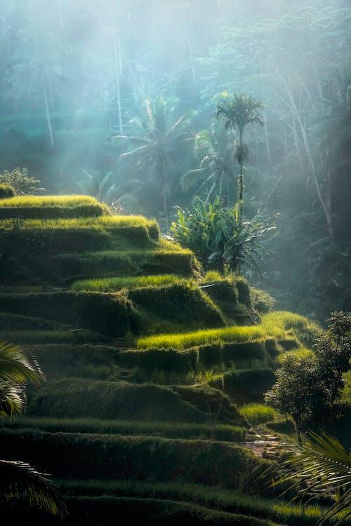 Ingyenes stockfotó bali, esőerdő, festői, köd témában