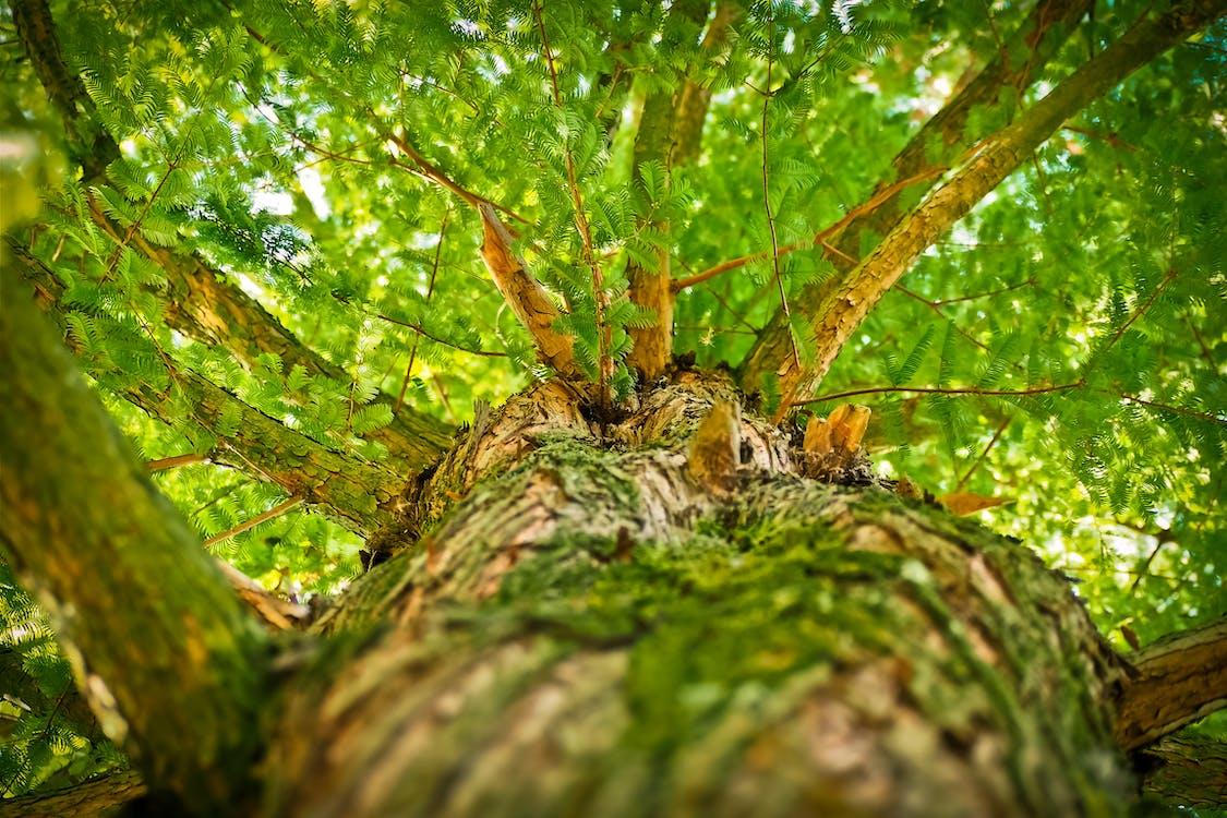 Green Tree Low-angle Photography