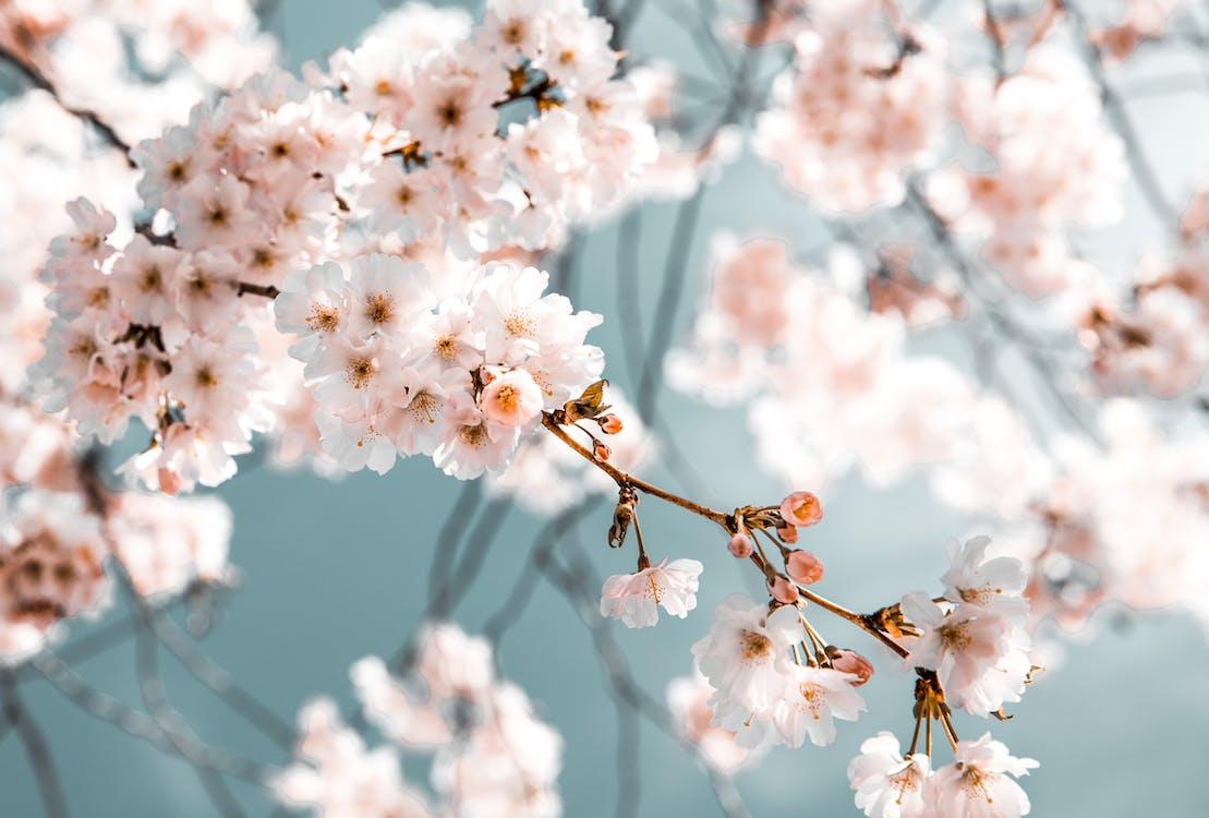 arbre, branca, flor