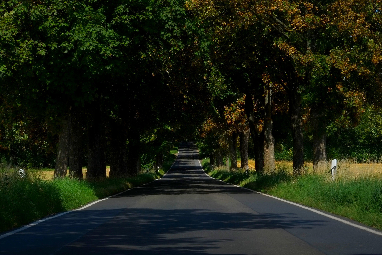 Gratis arkivbilde med asfalt, felt, gress, humør