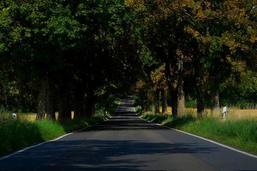 Asphalt Empty Road in Between of Tall Trees