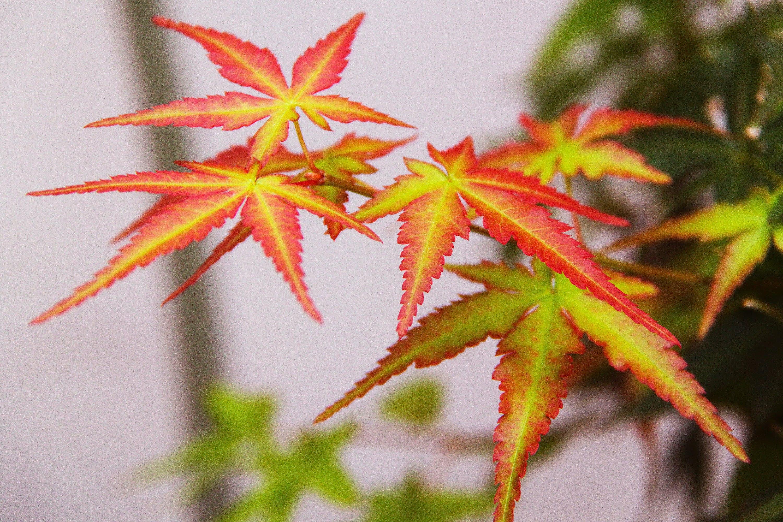 Free stock photo of asia, autumn, beautiful, city