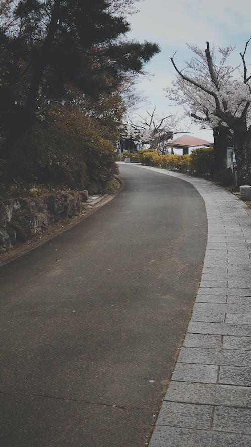 Photos gratuites de chemin, petit chemin, petite route, route