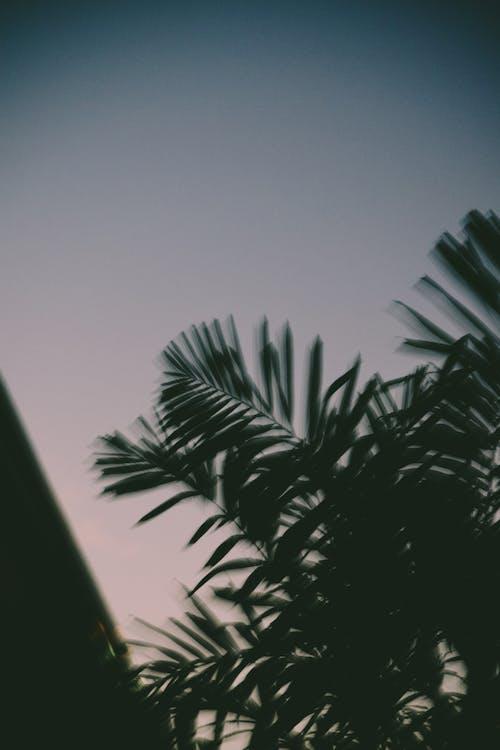 Ingyenes stockfotó alacsony szögű felvétel, borongós, életlen, fa témában