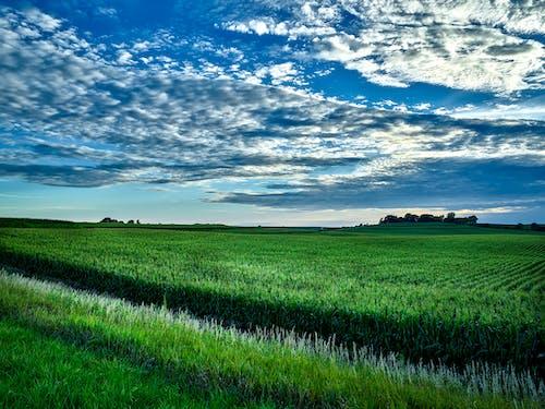 Бесплатное стоковое фото с hdr, живописный, зеленый, зерновое поле
