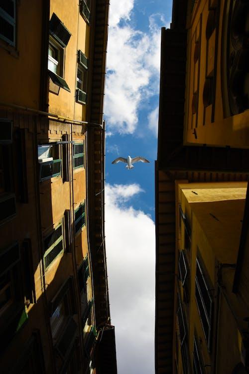 Foto d'estoc gratuïta de apartament, arquitectura, carrer, cel