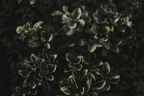 Základová fotografie zdarma na téma listy, rostlina, zahrada