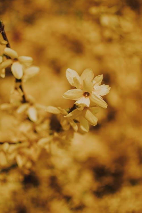 Foto profissional grátis de amarelo, ao ar livre, atraente, aumento