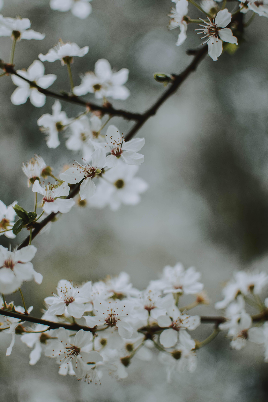 met bloeiend, bloem, bloemblaadjes, bloesem