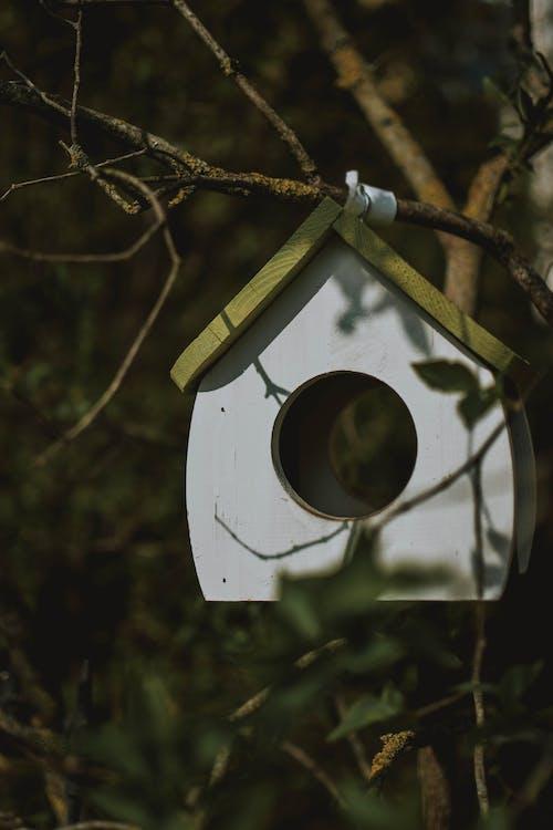 Gratis lagerfoto af blad, close-up, fuglehus, gren