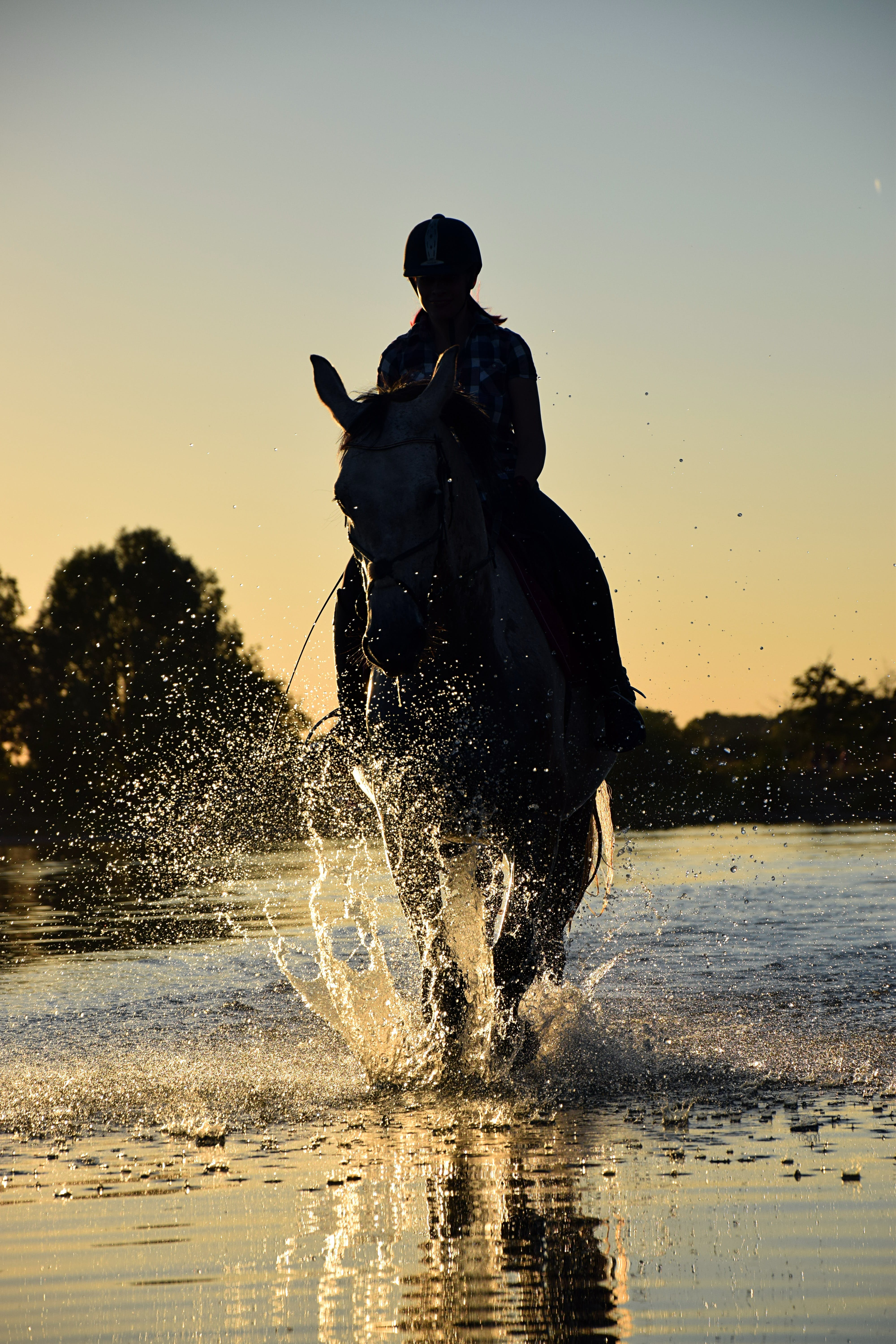 Person Riding Horse Walking on Body of Water during Golden Hour