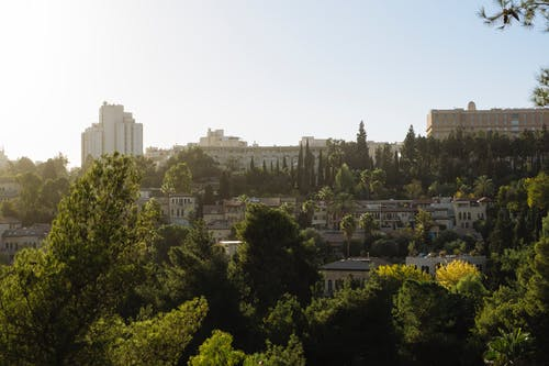 Kostenloses Stock Foto zu garten, garten stadt, grün, israel