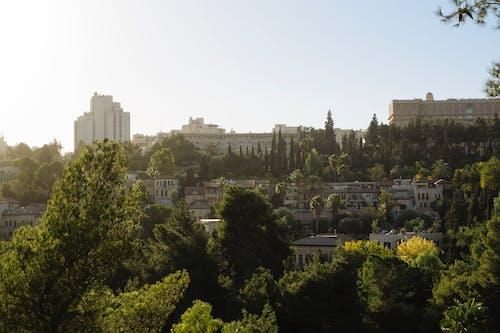 Gratis lagerfoto af by, grøn, have, haven by