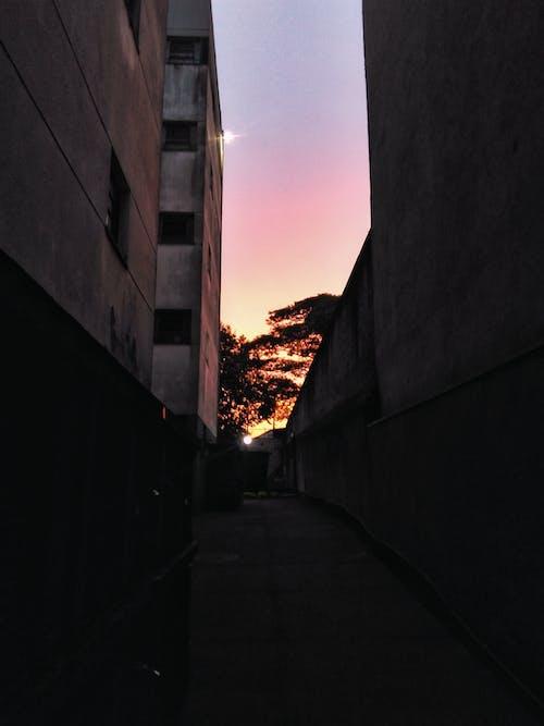 Photos gratuites de arbres, architecture, aube, bâtiment