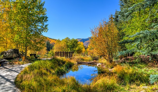 Royalty free images of water, trees, path, pond