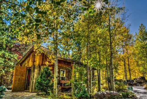 Ingyenes stockfotó Békés, építészet, épület, erdő témában
