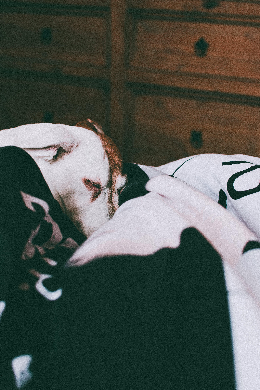 インドア, ペット, 可愛い, 哺乳類の無料の写真素材