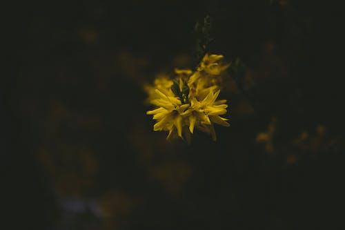 Foto d'estoc gratuïta de flor, flor bonica, flors, flors boniques