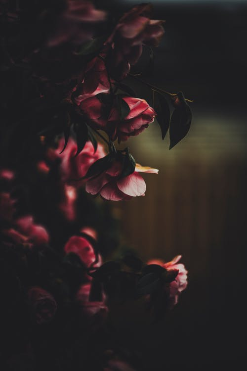 Photo or Red Flowers