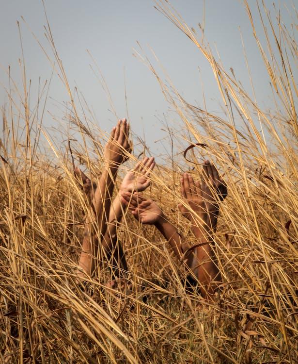 campagne, champ de blé, clairière