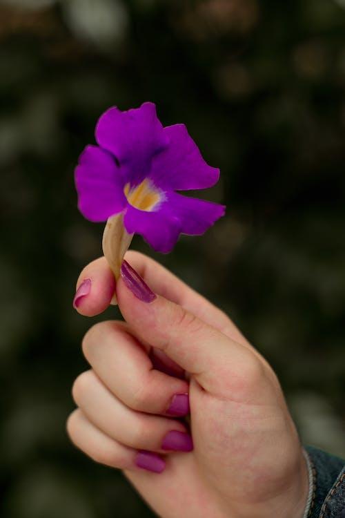 Бесплатное стоковое фото с держать, дизайн ногтей, женская рука, красивый