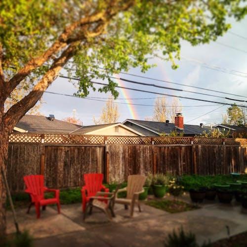 Gratis arkivbilde med bakgård, fjær, hage, regnbue