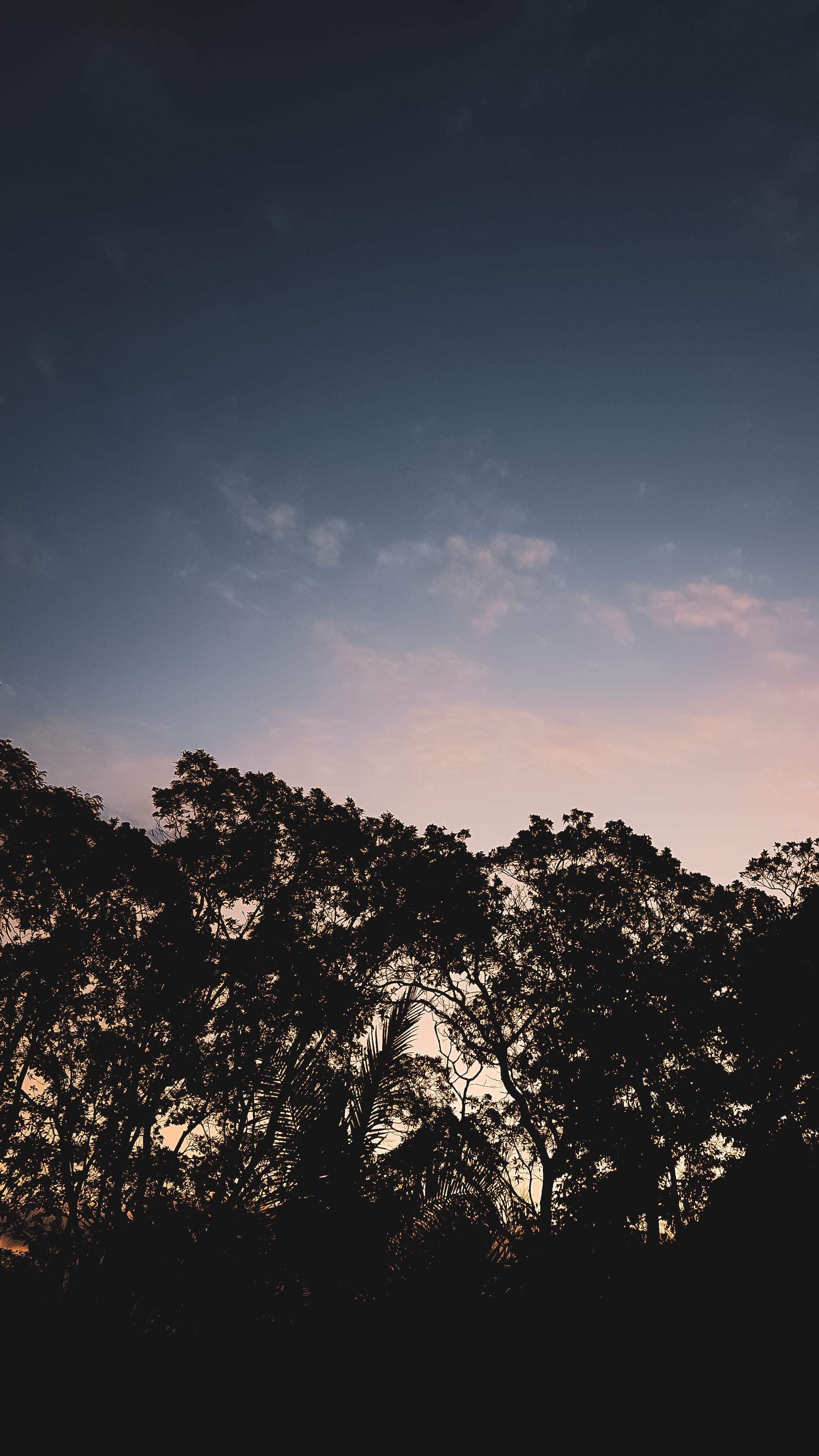Immagine gratuita di cielo azzurro, cielo nuvoloso, foresta in autunno, sole della sera
