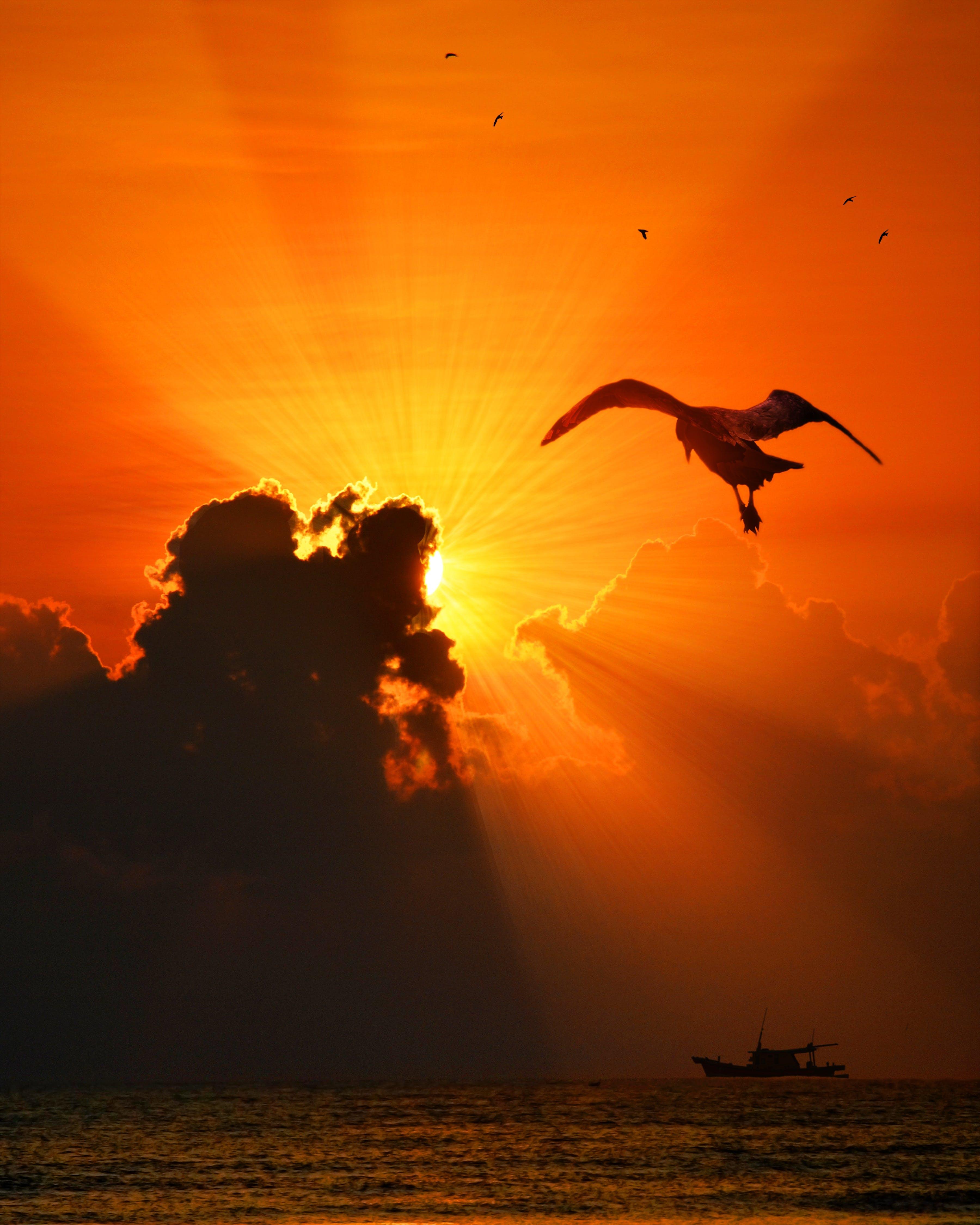 Free stock photo of sea, flight, landscape, nature
