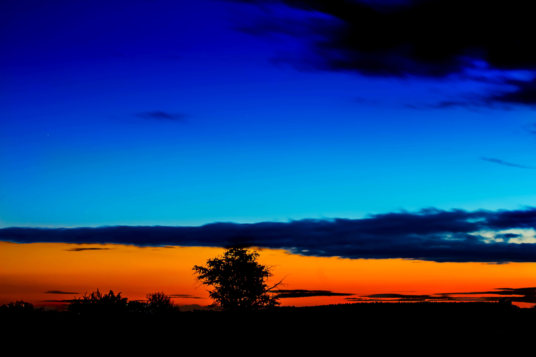 Foto profissional grátis de alvorecer, árvores, céu, cor