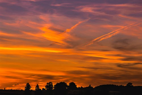 คลังภาพถ่ายฟรี ของ ซิลูเอตต์, ตก, ต้นไม้, ตะวันลับฟ้า